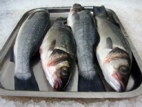 Fresh fish home delivery order fresh seafood online for Mail order fish