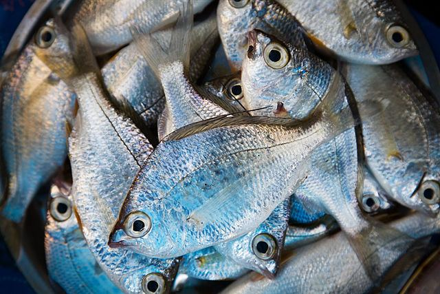 How Long Can Fish Be Kept In The Fridge Or Freezer George Hughes Fishmongers