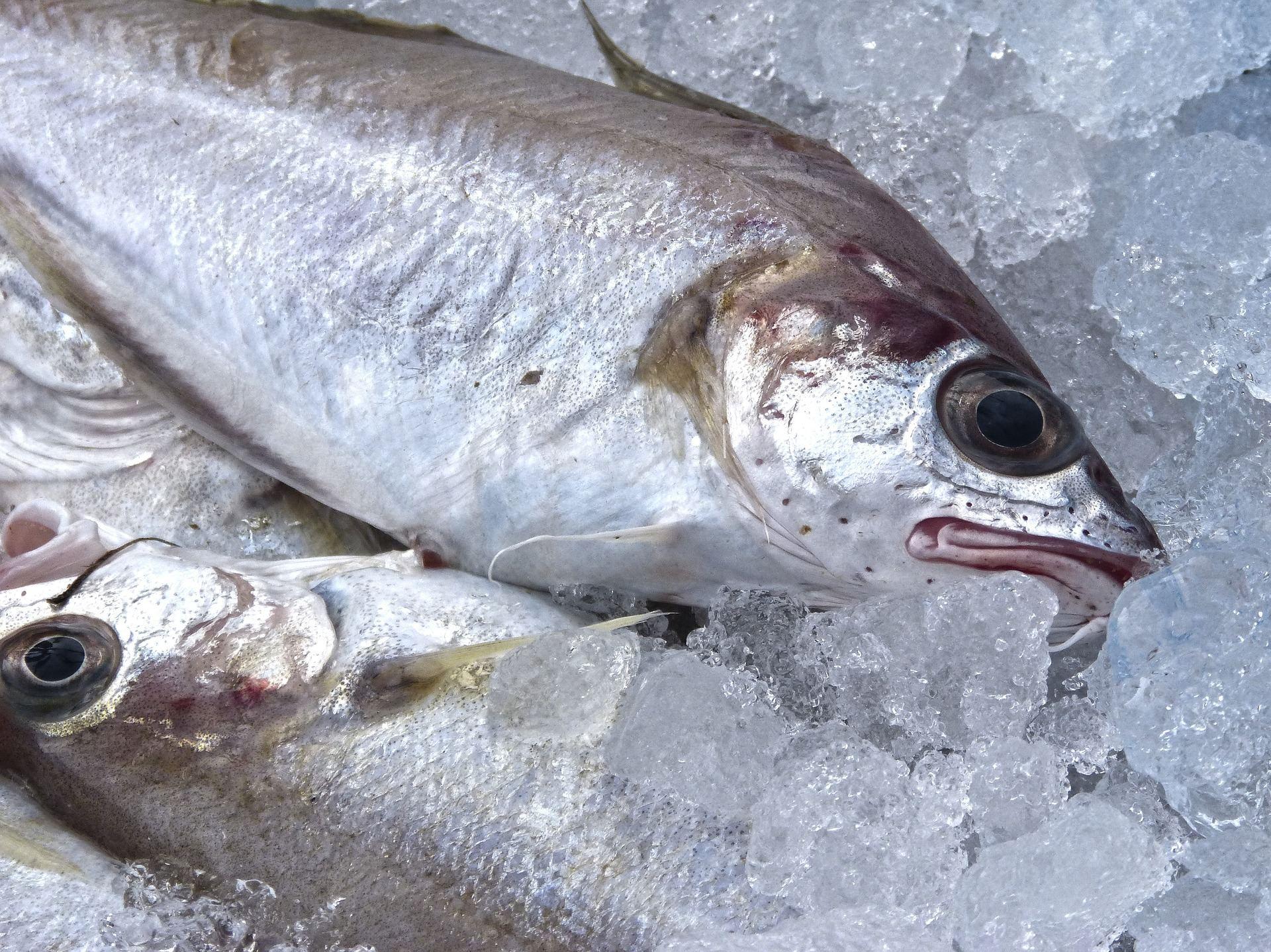 fresh-fish-1152113_1920