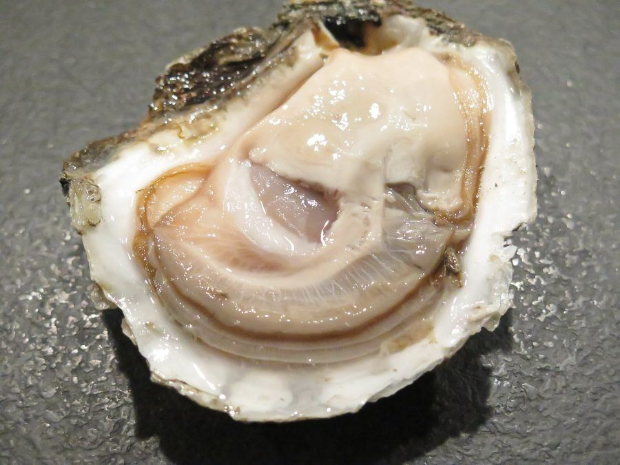 oyster-1576297_1920