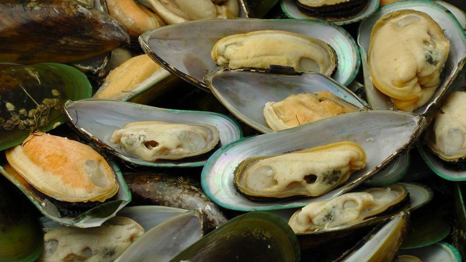 Open Mussels